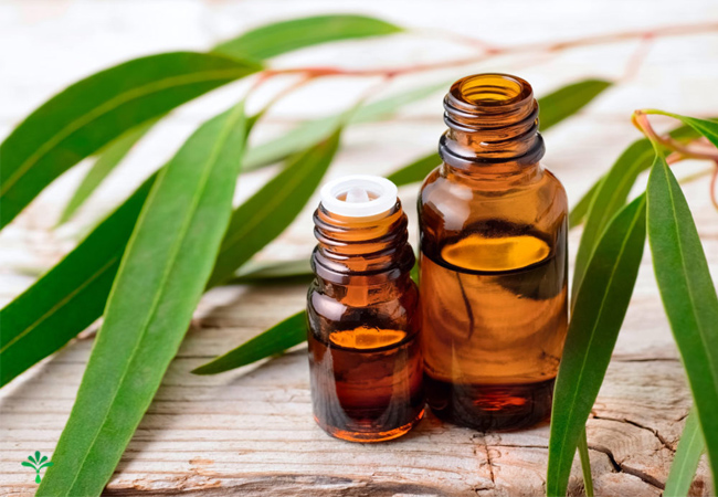 اسانس گیاهان دارویی